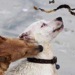 Ways to Stop Puppy Biting