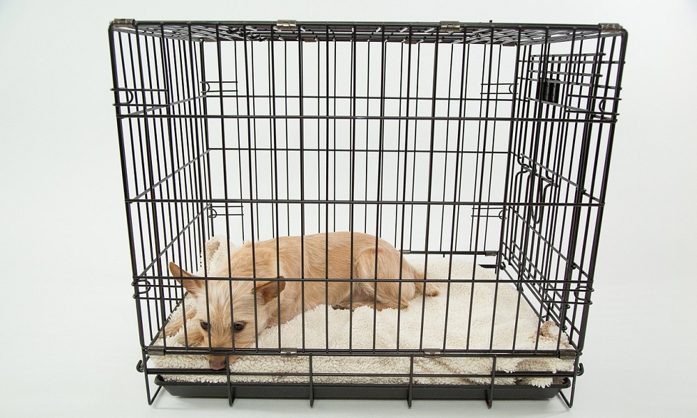 How to Crate Train a Dogs