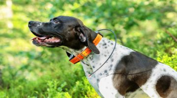 Top 10 Best Dog GPS Collars in 2018 – Reviewed & Compared