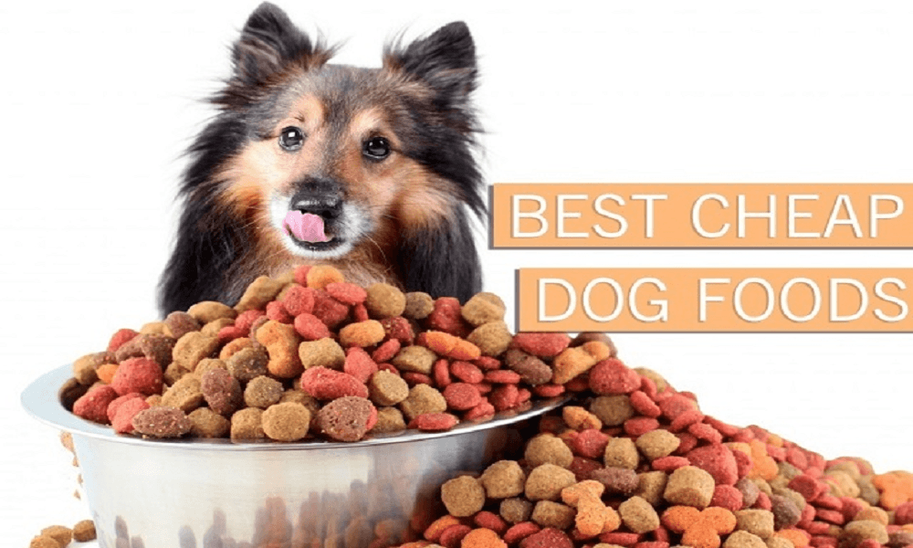Best Cheap Dog Foods
