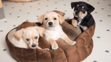 Best Chew Resistant Dog Beds 2018 – Buyer's Guide and Reviews