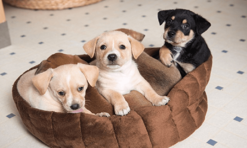 Best Chew Resistant Dog Beds