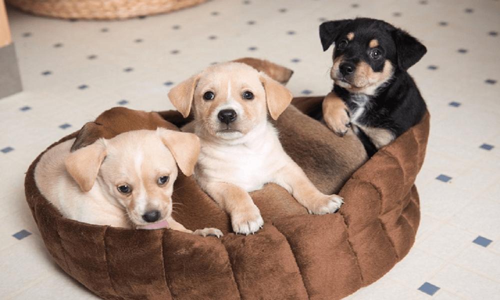 10 Best Chew Resistant Dog Beds (Dec. 2019) – Buyer's Guide