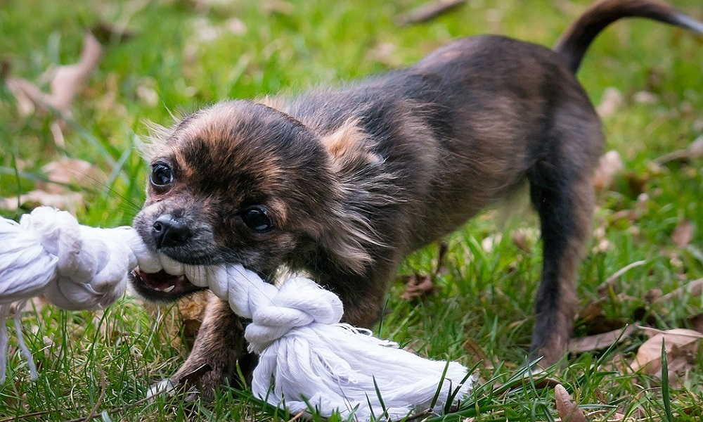 Best Puppy Toys for Dogs That Chew