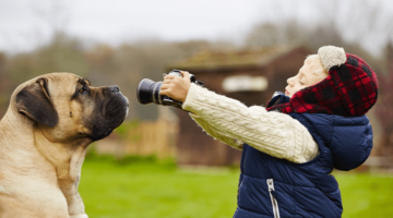 Top 10 Best Dog Cameras for Pet Monitoring in 2018 – Reviewed & Compared