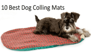 Best Dog Cooling Mats