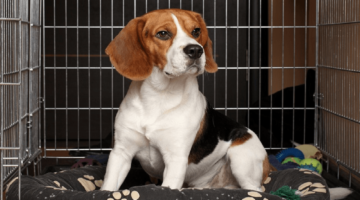 Best Dog Crates 2018 – Buyer's Guide and Reviews