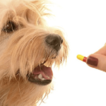 Top 10 Best Dog Dewormers in 2018 – Reviewed & Compared
