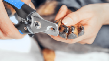 Top 10 Best Dog Nail Clippers in 2018 – Reviewed & Compared