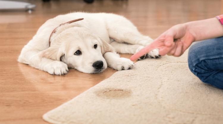 Top 10 Best Pet Odor Eliminator in 2018 – Reviewed & Compared