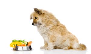 Best Wet Dog Foods