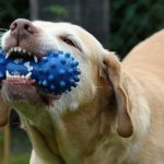5 Steps To Correct Inappropriate Dog Chewing Behavior