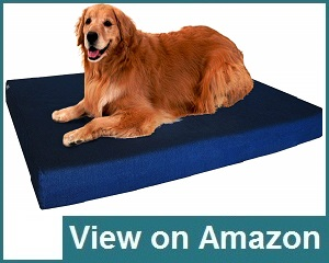 Dogbed4less Memory Foam Review