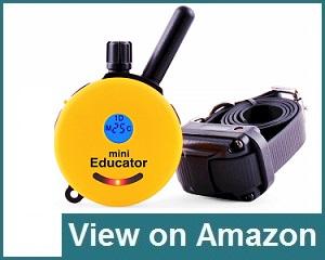 Educator 300 Review