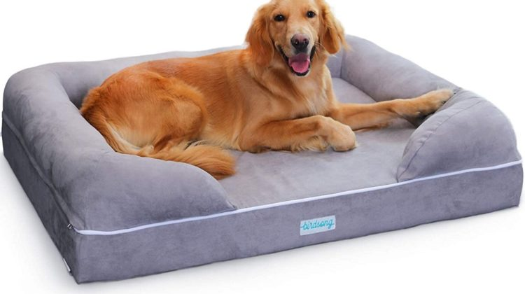 Best Large Dog Beds
