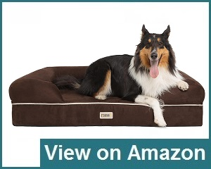 Friends Forever Orthopedic Dog Bed Review
