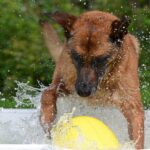 Best Dog Swimming Pools