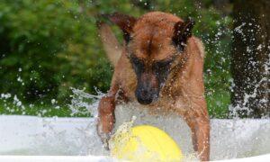 Best Dog Swimming Pools