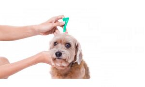 Best Flea Medicine for Dogs