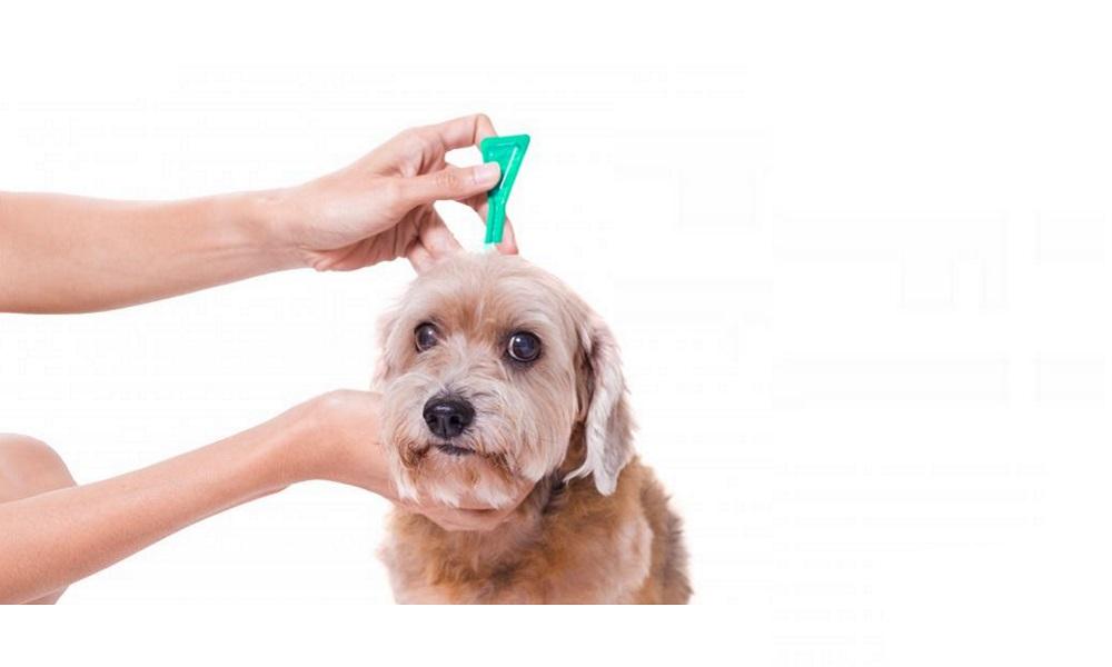 Best Flea Medicine for Dogs