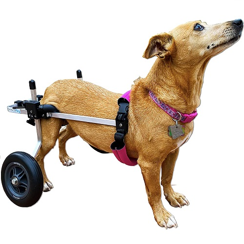 K9 Carts Original Dog Wheelchair Review