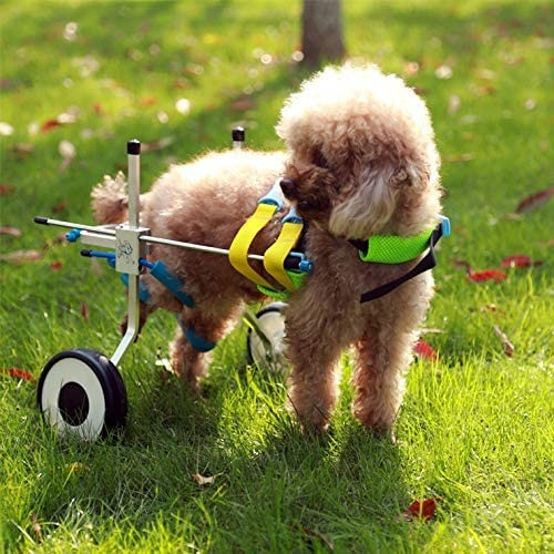 Newlife Mobility Dog Wheelchair Review
