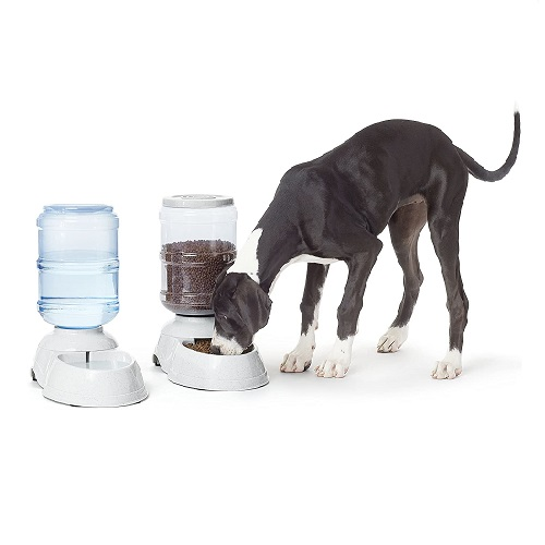AmazonBasics Automatic Dog Feeder Review