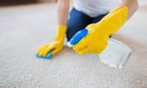 Best Pet Carpet Cleaners