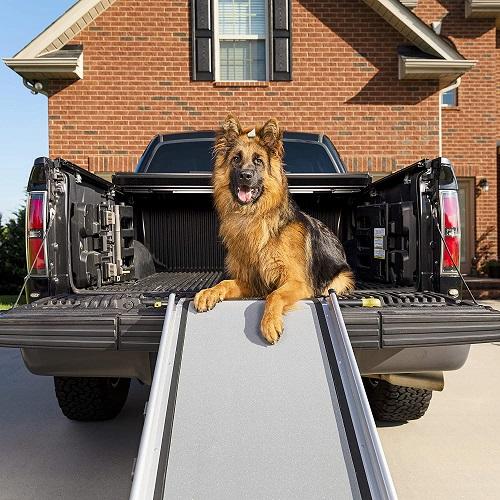 PetSafe Dog Ramp Review