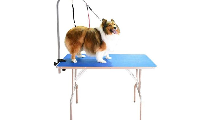 Best Dog Grooming Tables
