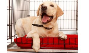 Best Dog Crate Pans