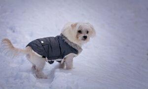Best Dog Winter Coats