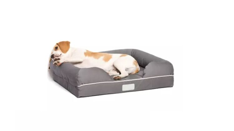 Best Heated Dog Beds