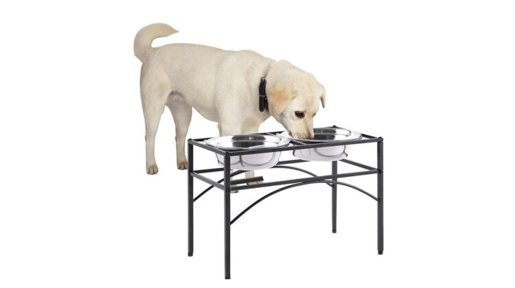 Best Dog Bowl Stands