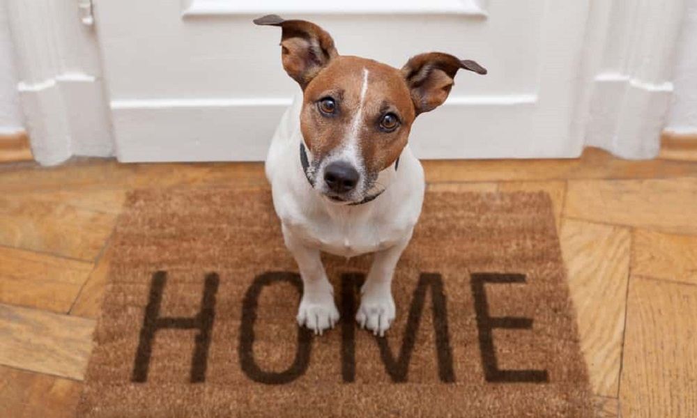 How To Eliminate Dog Smell In House