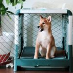How to Stop Dogs from Crying in the Crate