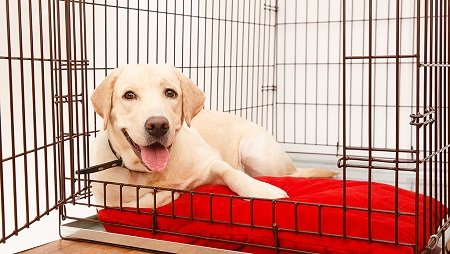 How to Train a Dog Not To Cry in the Crate