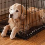 How to Stop Dogs from Peeing in the Crate