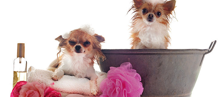 Ways to Eliminate Dog Smell from Your Home