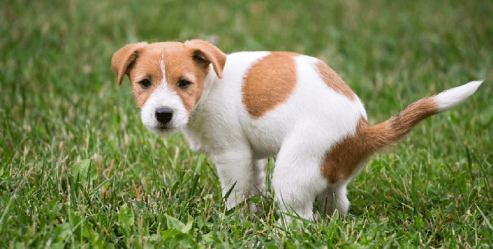 How to Diagnose, Treat, and Prevent Worms from the Dog's Body