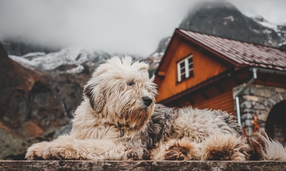 Methods to Heat Dog Houses Without Electricity