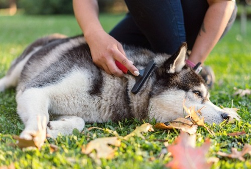 Special Ways to Control Your Dog's Shedding