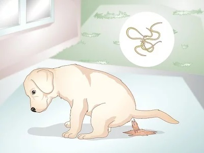 What are the Symptoms of Dogs with Worms