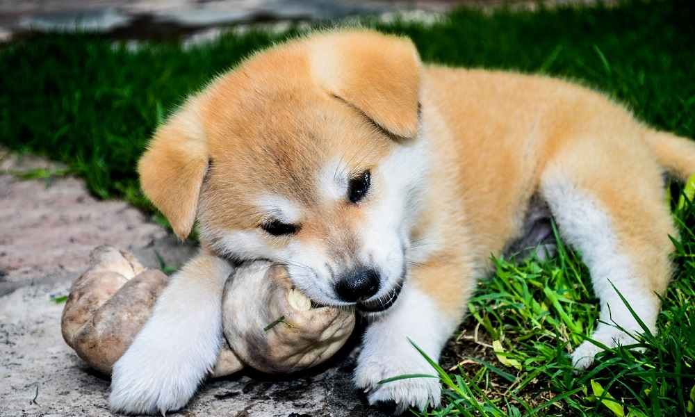 Benefits of Bones for Dog's Health