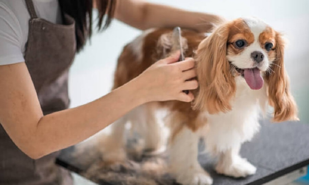How Much Should You Tip Your Dog Groomer