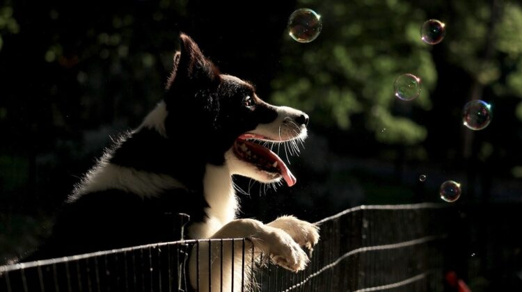 How to Keep Your Dog in the Yard without Fence