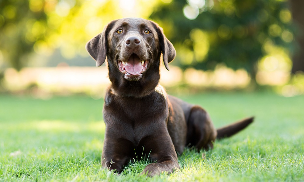 Why Do Dogs Like to Eat Rabbit Poop