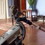 Why Do Dogs Scared of Vacuums