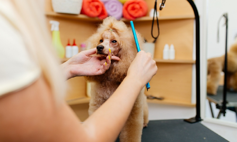 Features that may Impact the Dog Grooming Price