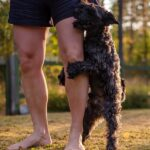 Stop a Dog from Humping Leg